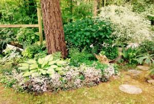 Saxifraga 'Maroon Beauty' and Kerria japonica 'Variegata'