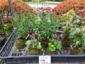 Plants for sale at roadside stand
