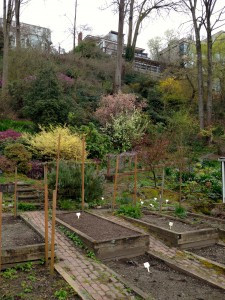 veggie beds and hillside