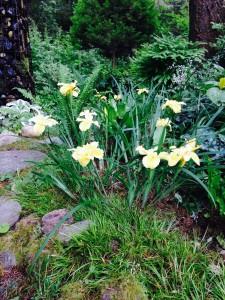 PCH in the garden