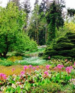 Spring view = Bergenia