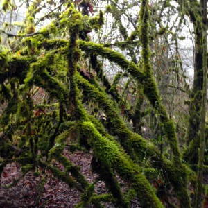 Shrubs covered in moss