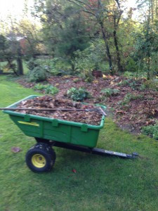 shredded leaves to be used as mulch