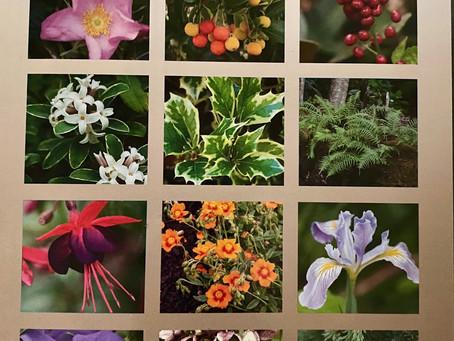 'Great Plant Picks'