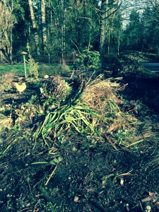 raw compost pile