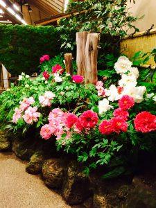 Peonies blooming in fall