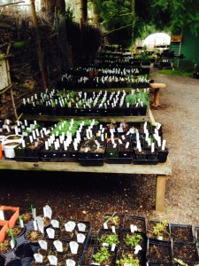 nursery tables ready to be picked over for sale