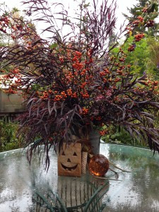 Seasonal container out in the garden