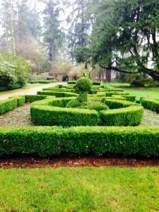 Boxwood hedges at Lakewold Garden
