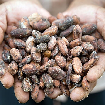 636985203008374745cocoa beans.jpeg