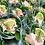 Thumbnail: Salades klein