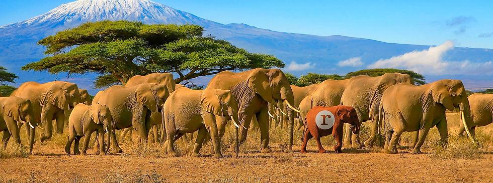 Elephant-redheadpress-herd-web.jpg