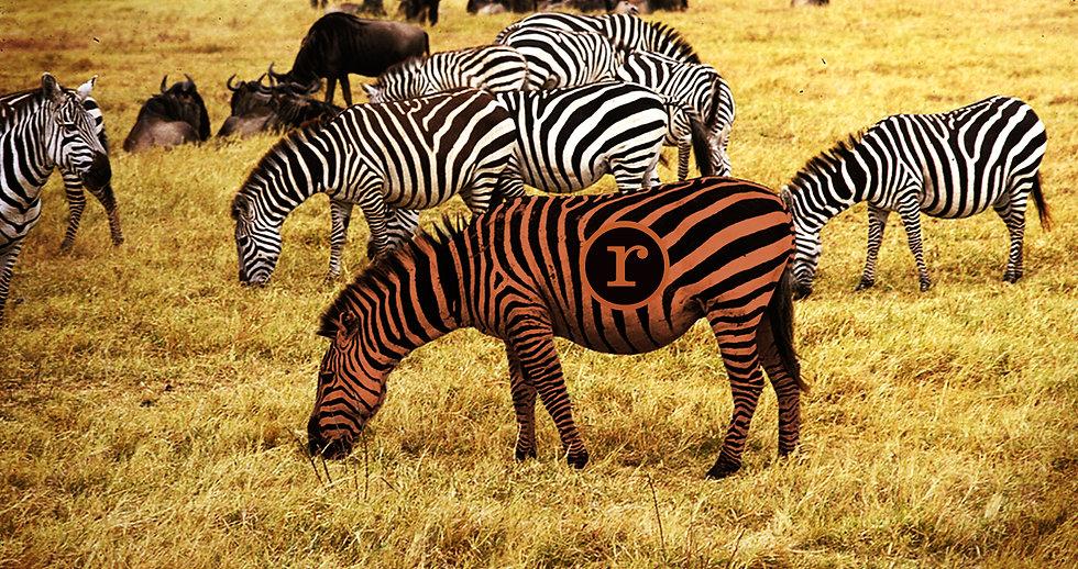Zebra-RedheadPress-AreYOU.jpg