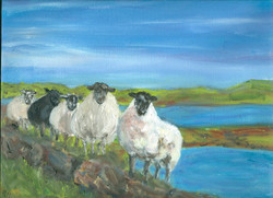 Donegal Sheep- scan.jpg