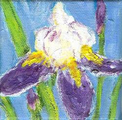 Betty's Iris