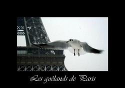 09_-_Les_goélands_de_Paris