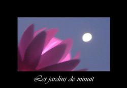 11 - Les jardins de minuit