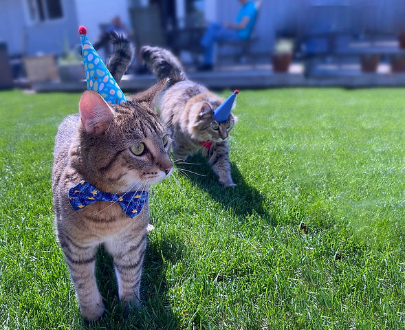 Party_Cats_in_Party_Hats-web_edited.jpg
