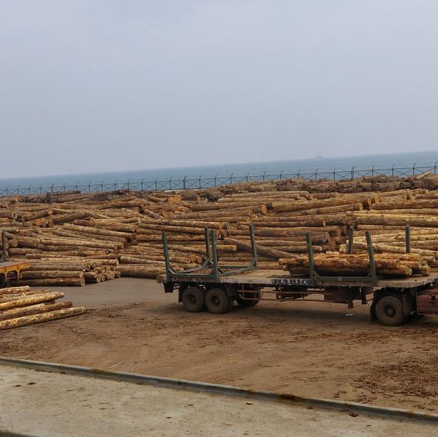 pinewood india tamil nadu