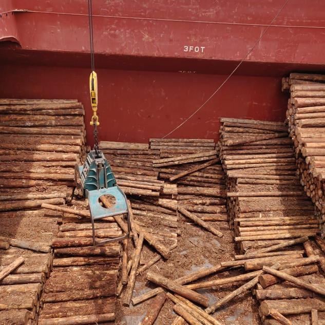 pinewood unloading india