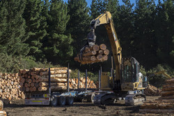 pinewood suppliers in india