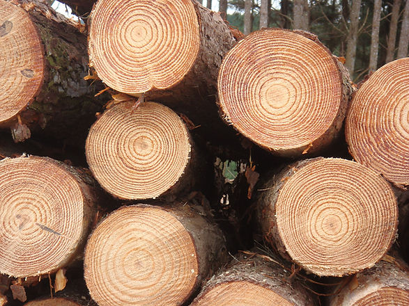 pinewood price