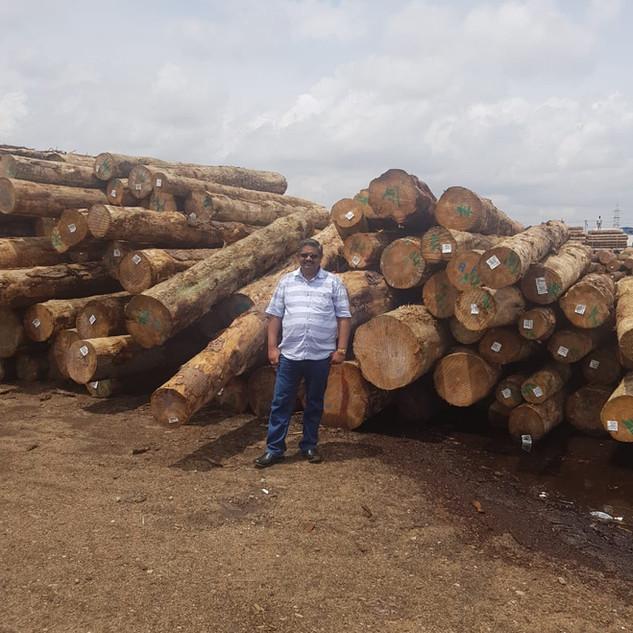 pinewood ambika