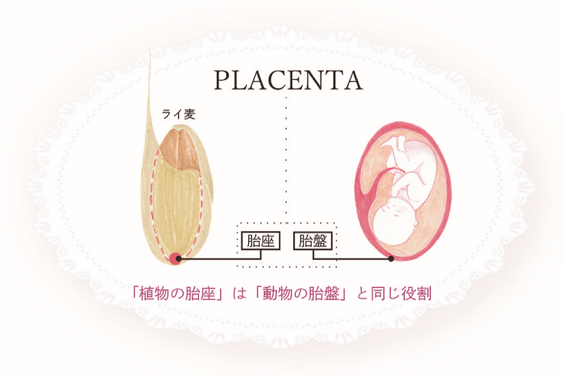胎座と胎盤