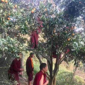 Namo Buddha Harvest