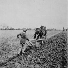 ploughboy.png