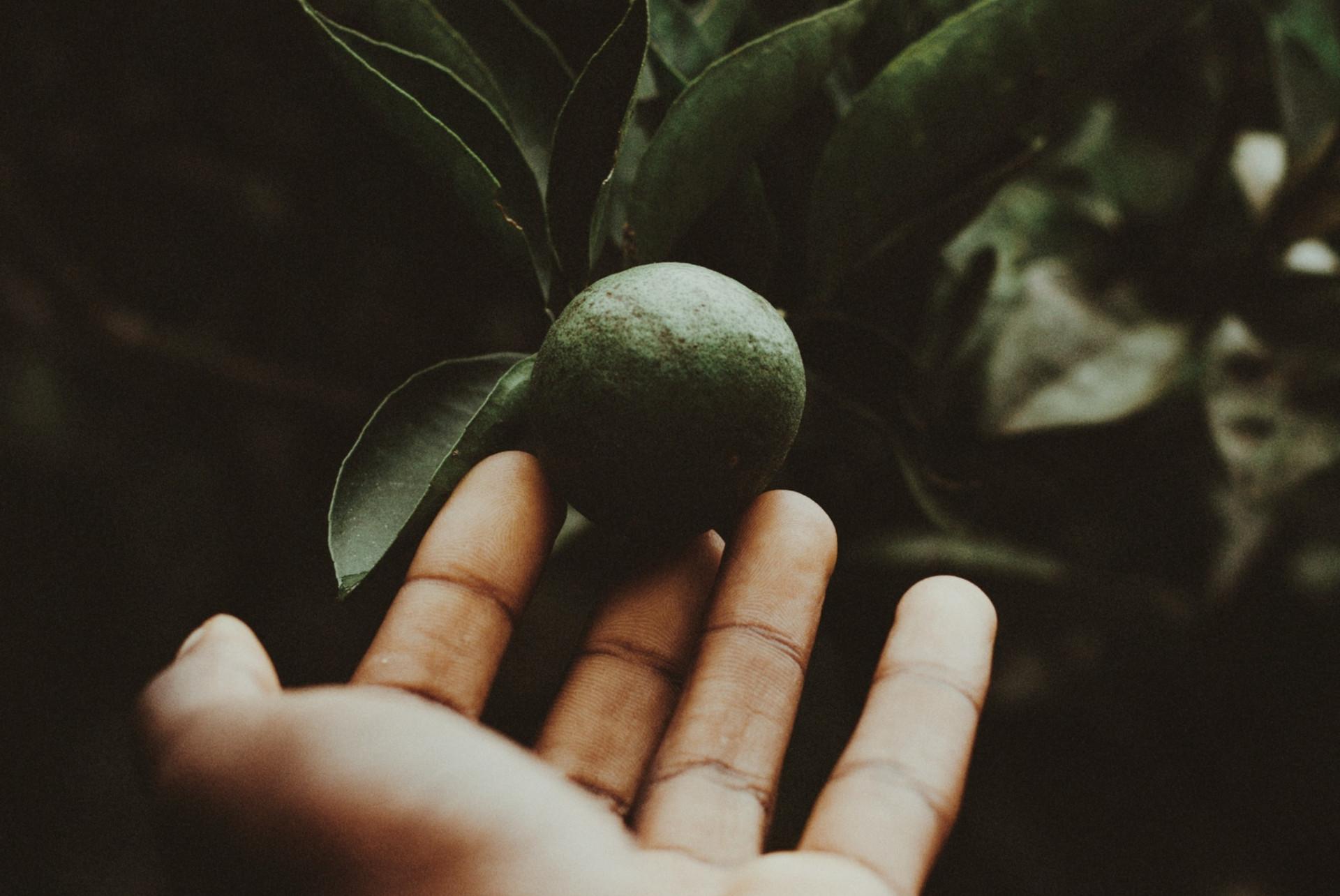 person-holding-citrus-fruit-1876272_edit