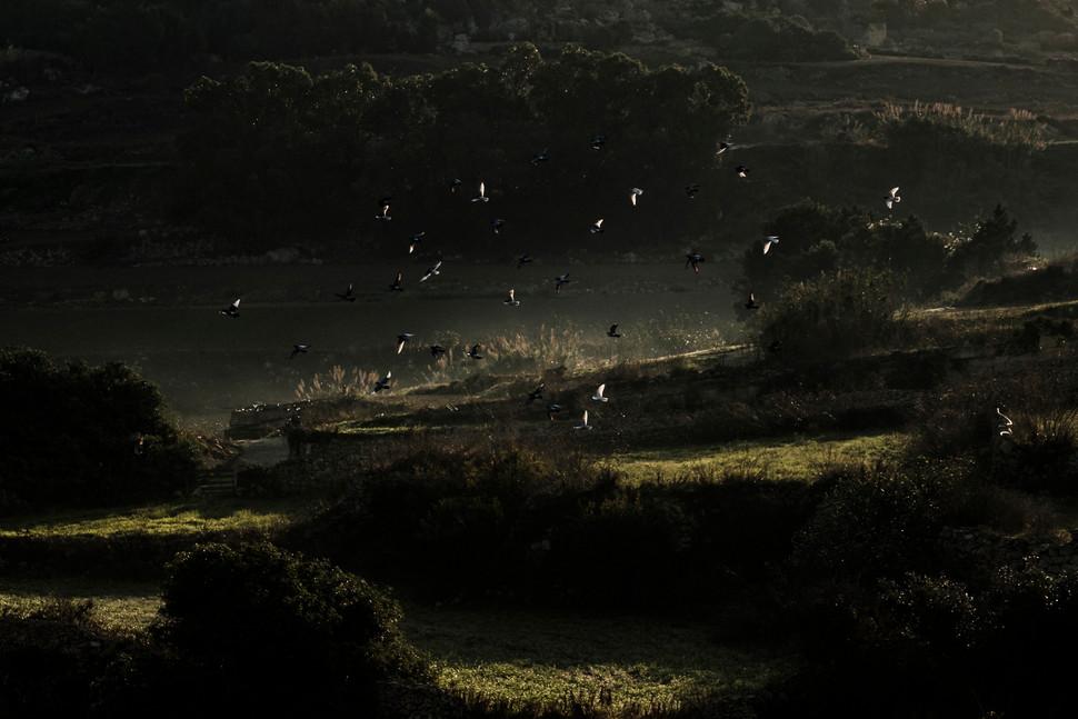 BRIANGRECH-Birds Scene-3552m.jpg