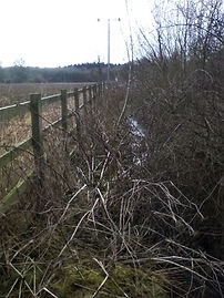 Fence line clearance - before