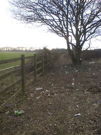Fence line clearance - after