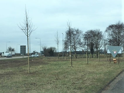 Landscaping on the A11