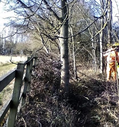 Tree & vegetation clearance - before
