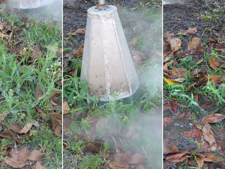 Council's Weed Treatment Full Steam Ahead