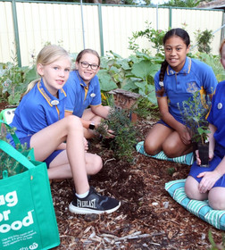 Schools Invited to Bee-come Environmental Champions