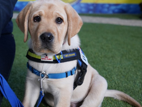 Petbarn Lends a Helping Paw to Seeing Eye Dogs Appeal