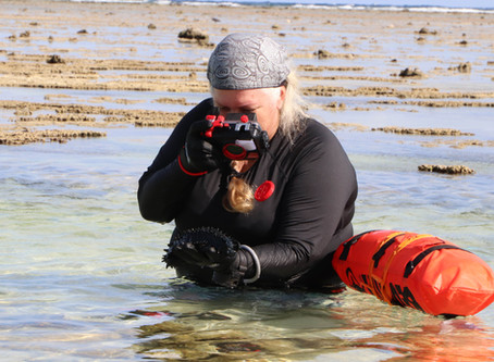 Call for citizen scientists to find reef island species