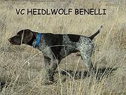 VC HIELDWOLF BENELLI 07.JPG