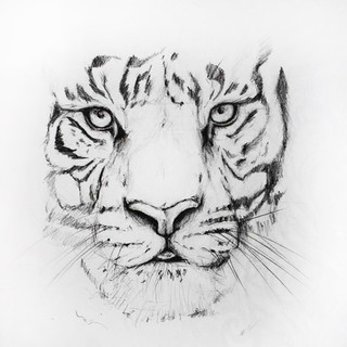 """""""Tiger"""" (2016)"""