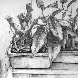 """""""Observation: Potted Plants"""" (2018)"""