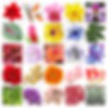 Floral Class Planning B A-Z_edited.jpg