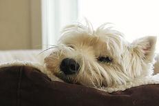Hundesitter in Küsnacht, Hundesitter in Zumikon, Hundesitter in Zollikon, Hundesitter in Erlenbach, Hundesitter in Herrliberg, Hundesitter in Stäfa, Hundesitter in Männedorf, Hundesitter in Meilen, Hundesitter in Rapperswil-Jona, Hundesitter in Thalwil, Hundesitter in Freienbach, Hundesitter in Wollerau, Hundesitter in Zug
