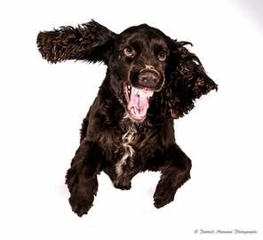 Happy Studio photo séance animaux chien