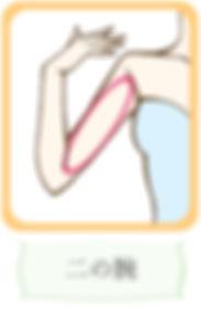 キャビテーション施術部位(二の腕)