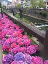 長崎紫陽花祭り