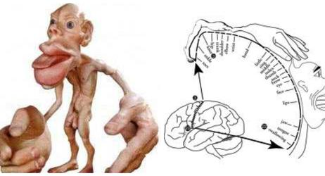 脳の機能からみた噛むことの重要性