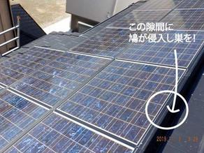 太陽光発電の鳩対策